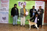 Gurgaon Dog Show (2 Feb 2014) | lineup,,sw-113,ex-50