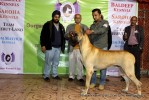 Gurgaon Dog Show (2 Feb 2014) | lineup,,sw-113,ex-127