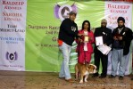 Gurgaon Dog Show (2 Feb 2014) | lineup,,sw-113,ex-27