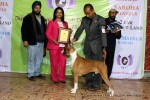 Gurgaon Dog Show (2 Feb 2014) | lineup,,sw-113,ex-102