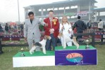 Gurgaon Dog Show Day1 | terrier,