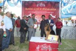 Jabalpur Dog Show 2013 | ex-212,german shepherd,line up,sw-81,