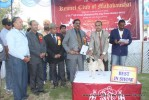 Jabalpur Dog Show 2013 | ex-24,line up,pug,sw-81,