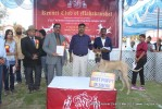 Jabalpur Dog Show 2013 | great dane,line up,sw-81,ex-136