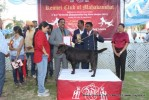 Jabalpur Dog Show 2013 | ex-61,labrador retriever,line up,sw-81,
