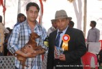 Jabalpur Dog Show 2013 | miniature pinscher,sw-81,