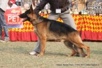 Kanpur Dog Show 2011 | ex-227,gsd,sw-42,