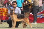 Kanpur Dog Show 2011 | ex-226,gsd,sw-42,