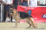 Kanpur Dog Show 2011 | ex-221,gsd,sw-42,