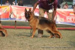 Kanpur Dog Show 2011 | ex-217,gsd,sw-42,
