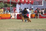 Kanpur Dog Show 2011 | ex-210,gsd,sw-42,