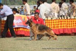 Kanpur Dog Show 2011 | ex-209,gsd,sw-42,