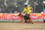 Kanpur Dog Show 2011 | ex-208,gsd,sw-42,