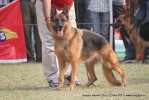 Kanpur Dog Show 2011 | ex-206,gsd,sw-42,
