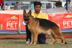 Kanpur Dog Show 2011 | ex-202,gsd,sw-42,