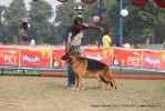 Kanpur Dog Show 2011 | ex-200,gsd,sw-42,