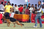 Kanpur Dog Show 2011 | ex-199,gsd,sw-42,