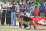 Kanpur Dog Show 2011 | gsd,sw-42,
