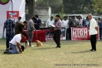 Kanpur Dog Show 2012 | judging,sw-72,toy group,