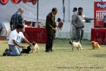 Kanpur Dog Show 2012 | sw-72,toy group,