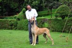 Kodaikanal Dog Show 2010 | great dane