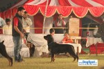 Lucknow Dog Show 2010 | sw-8, rottweiler,