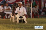 Lucknow Dog Show 2010 | sw-8, lucknow dog show 2010, terrier