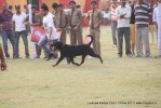 Lucknow Dog Show 2011 | rottweiler,sw-43,