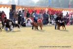 Lucknow Dog Show 2012 | sw-71,working group,
