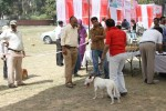 Meerut Dog Show | Terrier,