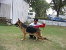 North India German Shepherd Speciality Dog Show, New Delhi |