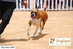 ooty dog show 2009 | boxer,