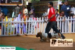 ooty dog show 2009 | basset,