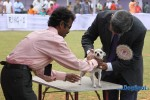 Orissa Kennel Club 2010 | chihuahua,ex-2,sw-10,