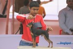 Orissa Kennel Club 2010 | ex-3,minpin,sw-10,