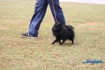 Orissa Kennel Club 2010 | ex-8,pom,sw-10,