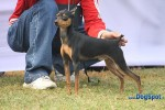 Orissa Kennel Club 2010 | minpin,sw-10,