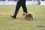 Orissa Kennel Club 2010 | pom,sw-10,