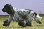 Orissa Kennel Club 2010 | cocker,ex-32,sw-10,