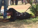 Pune KCI Dog Show 18th and 19th January, 09 |