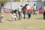 Royal Kennel Club Dog Show 2011 | working group,