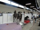Royal Melbourne Dog Show | royal melbourne dog show