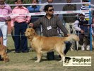 in delhi dog show... |