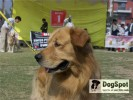 in international dog show.. |
