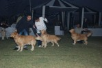 sekhonz winning retriever.. |