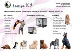 SOORIYA K9 TRAINING SCHOOL |