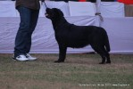 Taj Kennel Club 2012 | labrador,sw-51,