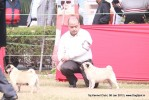 Taj Kennel Club 2012 | ex-16,pug,sw-51,