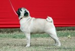 Taj Kennel Club 2012 | ex-29,pug,sw-51,