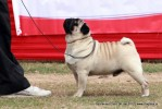 Taj Kennel Club 2012 | ex-34,pug,sw-51,